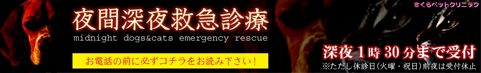 夜間深夜救急診療サービス|さくらペットクリニック|動物病院|鹿児島市