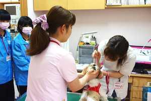 職場体験学習_201504|さくらペットクリニック|動物病院|鹿児島市