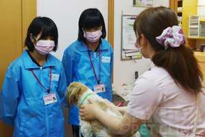 職場体験学習_201505|さくらペットクリニック|動物病院|鹿児島市