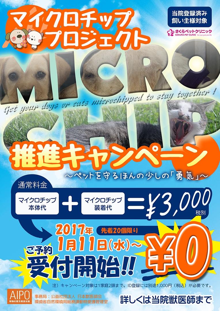 マイクロチッププロジェクト推進キャンペーン|さくらペットクリニック|動物病院|鹿児島市