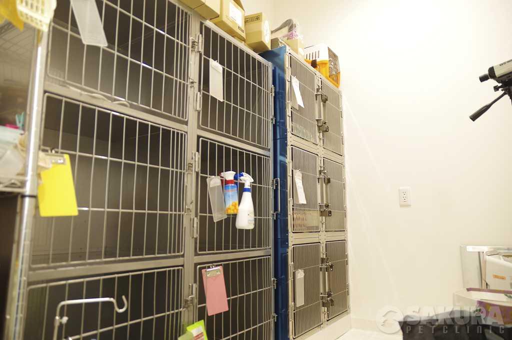 キャットルーム_spc1|さくらペットクリニック|動物病院|鹿児島