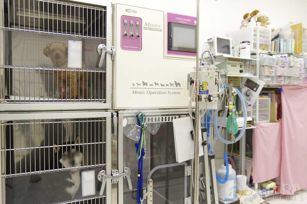 集中治療器ICU_spc1|さくらペットクリニック|動物病院|鹿児島